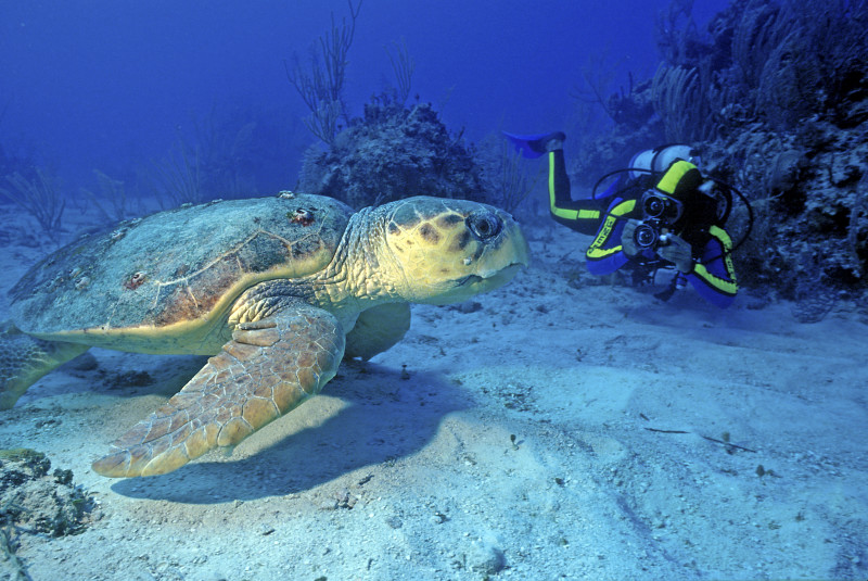 scuba diving - turtle - anse chastanet